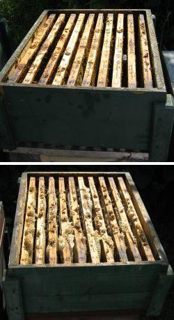 Üres fiók és mézes fiók
